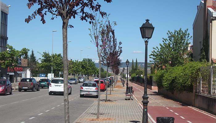 El Ayuntamiento de Cabanillas sustituye árboles enfermos y que generan destrozos por nuevos ejemplares