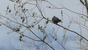 La primavera llega con todo su esplendor al zoo de Guadalajara