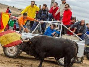Ecologistas en Acción de Guadalajara pide a los ayuntamientos de la provincia que no celebren sus fiestas patronales con maltrato animal