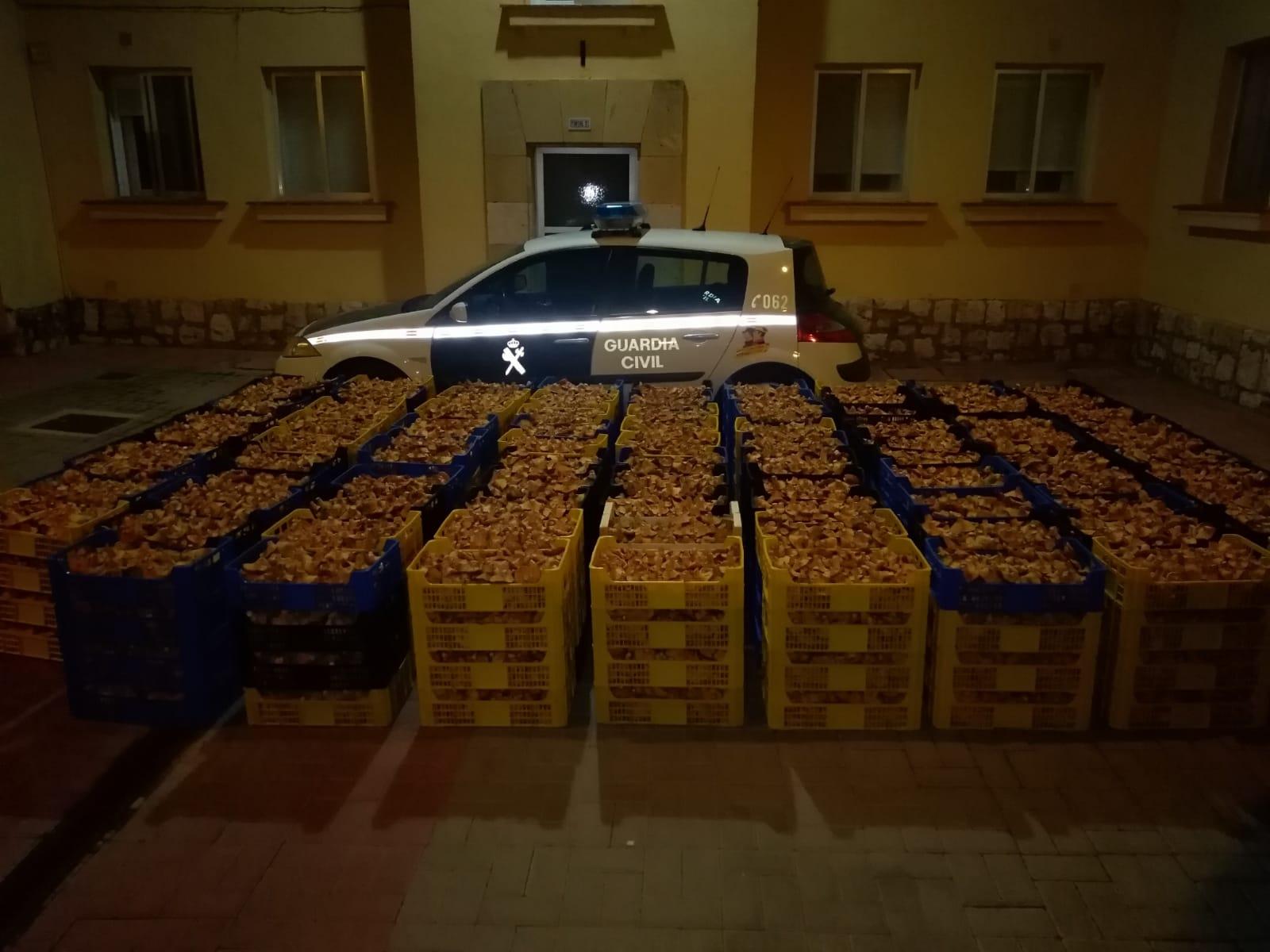 La Guardia Civil decomisa cerca de dos toneladas de níscalos en Torre del Burgo