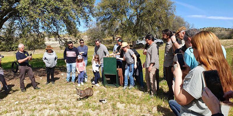 Liberado un nuevo ejemplar de lince ibérico en Villarejo de Montalbán