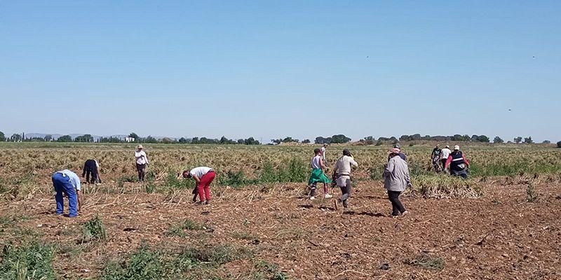 CCOO-Industria CLM inicia el plan sindical de visitas a explotaciones agrarias y atención a temporeros durante las campañas de este año