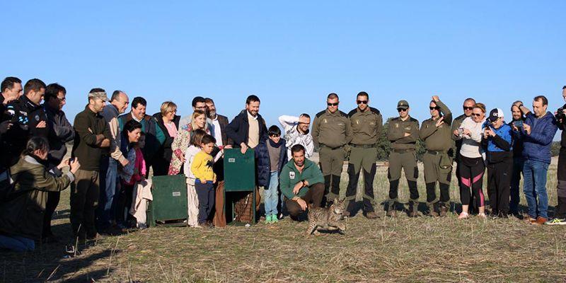 La Junta muestra su satisfacción tras aprobarse el proyecto europeo 'Life Lynxconnect' hasta 2025, un impulso definitivo para consolidar al lince ibérico