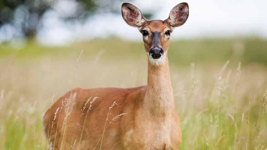 El IREC armonizará la recopilación de datos poblacionales de fauna silvestre para mejorar los sistemas de vigilancia sanitaria
