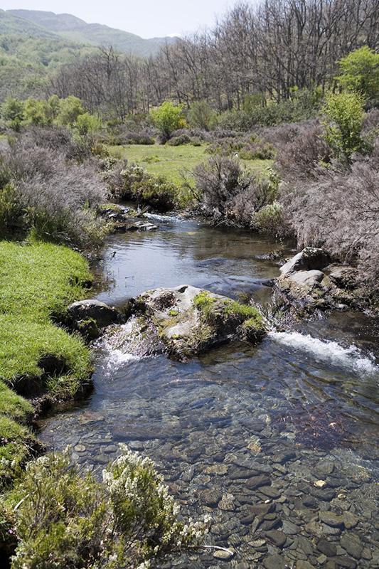Sierra Norte de Guadalajara el aire más puro de España, Estrellas Michelin y patrimonio natural e histórico, ocio anti-rebrote