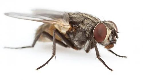 Comienza en Cabanillas una campaña de desinsectación para la temporada de moscas