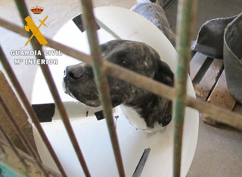 La Guardia Civil localiza a las dos personas, una de Guadalajara, que habían abandonado a dos perros en Tafalla y Viana