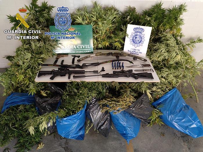 Intervenidas en dos parcelas de Brihuega numerosas plantas de marihuana, destinadas al tráfico