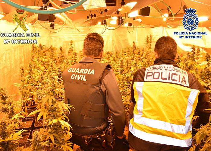 """Intervenidas más de 5500 plantas de marihuana a una banda organizada que se dedicaba al cultivo ilegal mediante plantaciones """"Indoor"""" en El Casar y Trijueque"""