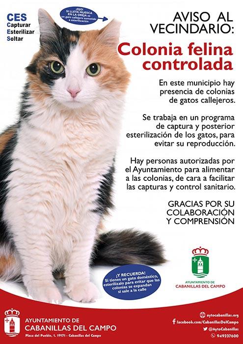 El programa CES de control de colonias felinas en Cabanillas cierra su primer año con más de 200 esterilizaciones
