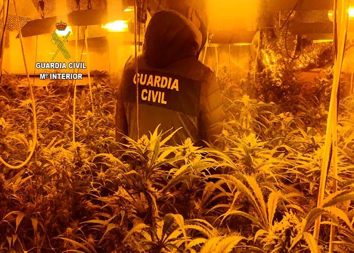 """La Guardia Civil desmantela una plantación de marihuana """"indoor"""" en Valdeaveruelo con 710 plantas"""