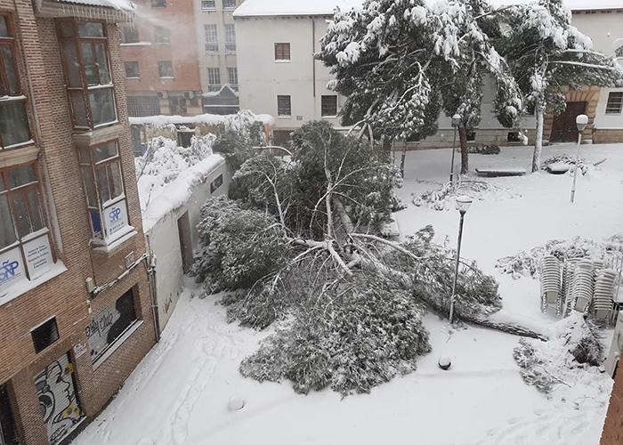 Riesgo extremo en las calles de Guadalajara por caídas de árboles y desprendimientos de nieve en fachadas y cornisas
