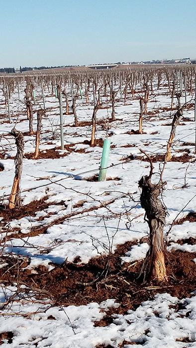 Unión de Uniones de Castilla-La Mancha pide a Agricultura que no ponga trabas al control cinegético de daños agrícolas