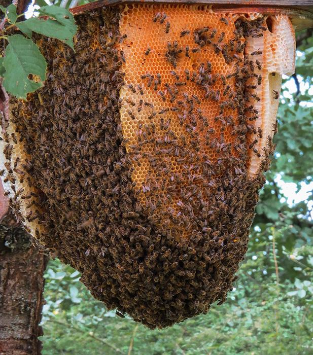 Unión de Uniones propone que el Plan Nacional Apícola 2020 -2022 se oriente al apicultor profesional