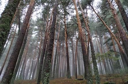 Aumentar la diversidad en los bosques resulta insuficiente ante eventos extremos de sequía