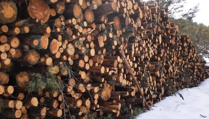 Ecologistas en Acción denuncia que los árboles talados en el PN de la Serranía de Cuenca estaban sanos