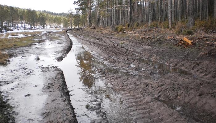 Ecologistas en Acción denuncia talas abusivas de pino albar en la Serranía de Cuenca