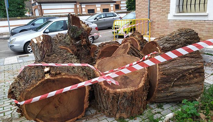 El PP exige explicaciones por la tala indiscriminada de árboles protegidos en el centro de Azuqueca