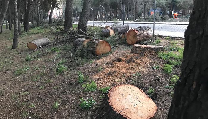 Ecologistas en Acción denuncia un arboricidio en el futuro campus universitario de las Cristinas de Guadalajara