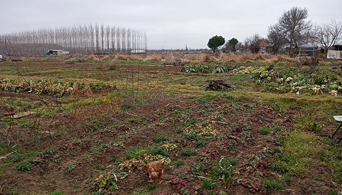 Ecologistas en Acción presenta propuestas para regular los huertos urbanos en Fontanar