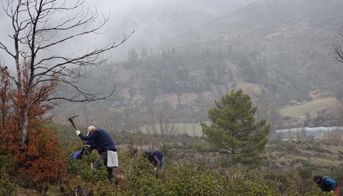 Comienza un proyecto piloto para la restauración del incendio de 2012 en Checa y Chequilla