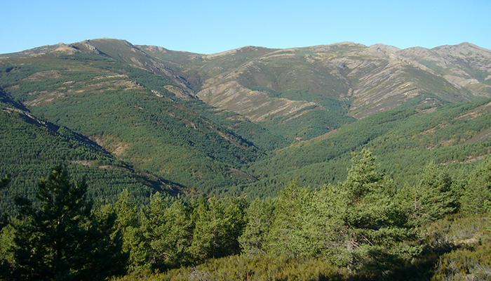 Montes de Guadalajara