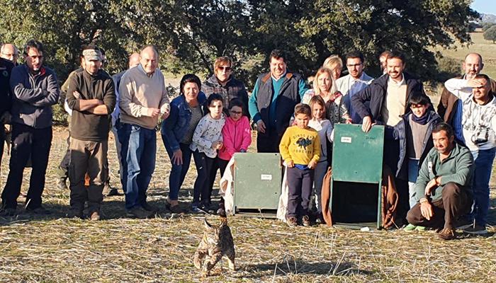 Castilla-La Mancha consolida la reintroducción del lince en la región con tres núcleos de población asentados y 327 ejemplares de los 1.111 censados en la Península Ibérica en 2020
