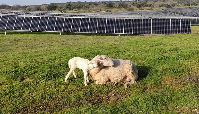 Solaria generará más de 4.000 empleos en la provincia de Guadalajara con su complejo fotovoltaico Cifuentes-Trillo 626MW