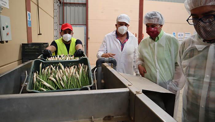Castilla-La Mancha avanza en la propuesta para que el espárrago verde de Guadalajara se convierta en IGP
