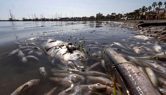 """""""Salvad el Tajo, salvad el Mar Menor"""", los Ribereños señalan de nuevo el origen del problema tras una nueva mortalidad de peces que ha afectado a la albufera murciana"""
